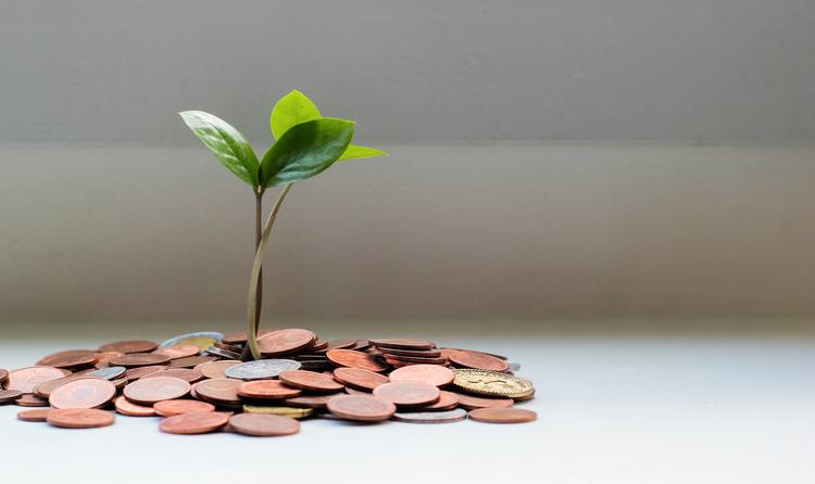 Растение растёт в монетах
